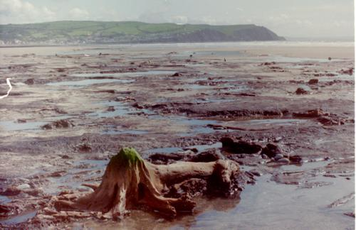 Petrified Forest, Cardigan Bay, Wales