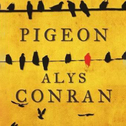 Cover of Pigeon